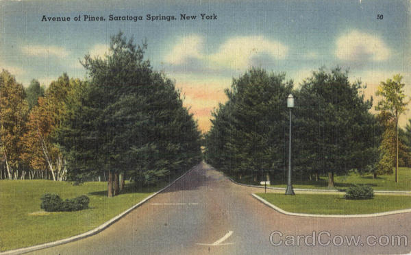 Avenue Of Pines Saratoga Springs New York