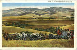 A Washington Harvest Scene Postcard