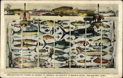 Collection of Fishes of Ernest W. Brown, on Exhibit at Brown Hotel
