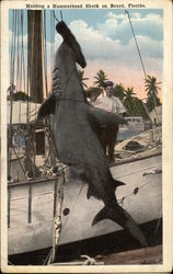 Hauling a Hammerhead Shark on Board