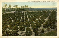 Bird's Eye View of Orange Grove