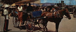 Colorful Carriages for Sightseeing Tourists Large Format Postcard