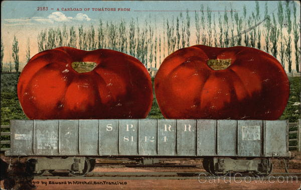 A Carload of Tomatoes From Exaggeration