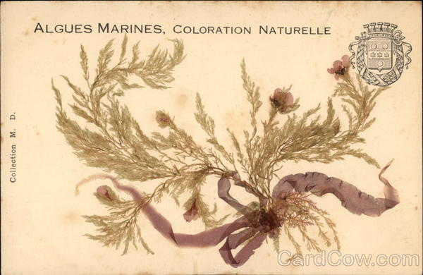 Algues Marines, Coloration Naturelle