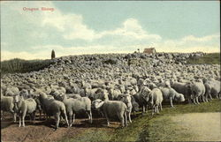 Oregon Sheep Herd