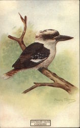 Kookaburra Bird on a Branch - Australian Fauna Series