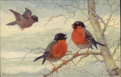 """Cheery Songsters"" with Birds on a Branch"