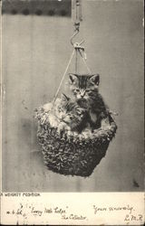 A Weighty Position with Kittens in a Basket