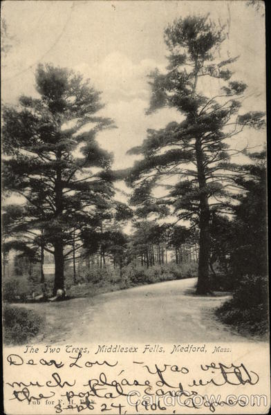 The Two Trees, Middlesex Falls Medford Massachusetts
