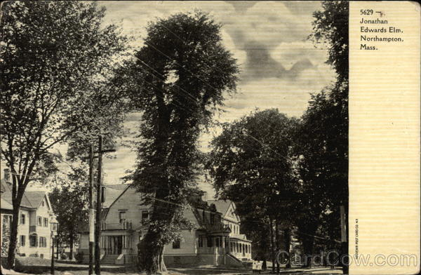 Jonathan Edwards Elm Northampton Massachusetts