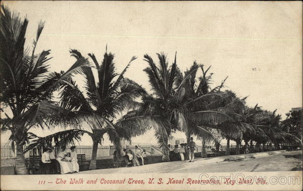 The Walk and Cocoanut Trees, US Naval Reservation Key West Florida