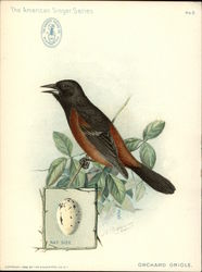 Orchard Oriole - Singer Sewing Machines
