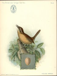 House Wren - Singer Sewing Machine Co