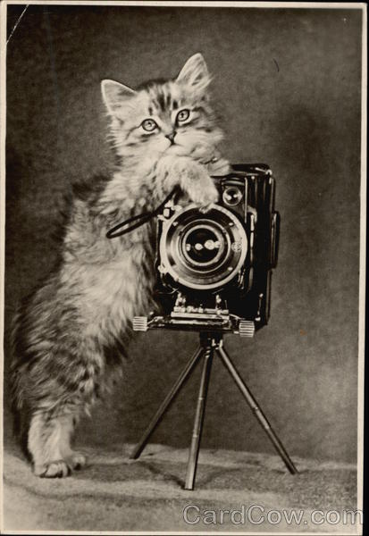 Fluffy Kitten Holding A Camera Cats