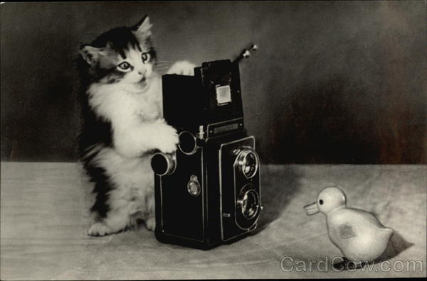 Kitten Taking Photo of Rubber Duckie Cats Cameras
