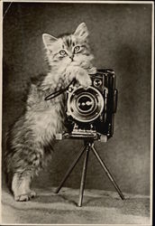 Fluffy Kitten Holding a Camera