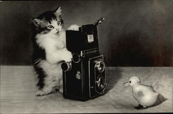 Kitten Taking Photo of Rubber Duckie