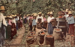 Coffee Pickers in Colombia