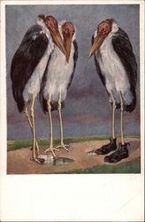 Three Large Storks -- One is wearing Shoes