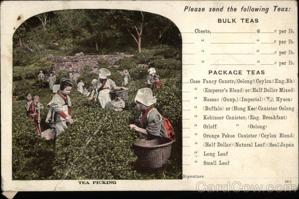 Tea Picking - Chase & Sanborn Tea and Coffee Importers