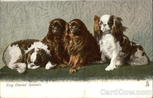 Four King Charles' Spaniels Dogs