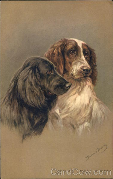 One Black and One Brown & White Spaniel Dogs