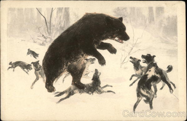 Pack of Dogs Surrounding Large Bear Multiple Animals
