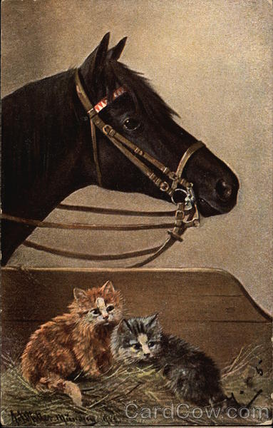 Black Horse Standing Near Two Kittens Multiple Animals