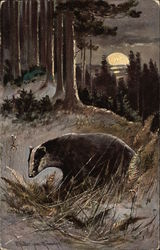 A Badger in the Moonlight