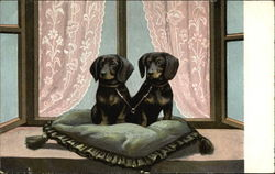 2 Daschund Puppies Ditting on Pillow