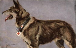 German Shepard Wearing Rescue Collar
