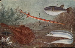 Underwater View of Fish Varieties - Card has Asian Writing