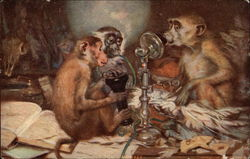 Three Monkeys Playing With A Phone