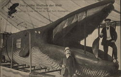 One of the Largest Whales in the World