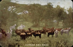 Zebras and Gnus