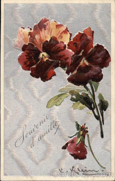 Remember Friendship with Burgundy Pansies C. Klein