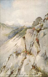 """Alpines on the Rocks of Rochers de Naye"" - Alpine Flowers Series Postcard"
