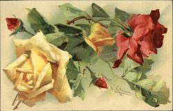Red and Yellow Roses - Blooms and Buds
