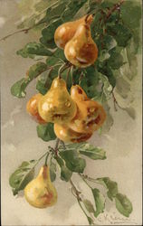 Golden Pears on a Branch