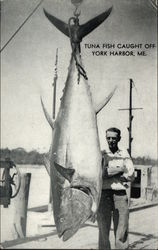 Huge Tuna Fish Catch