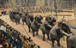 "The Ringling Brothers & Barnum & Baily Elephants Perform the ""Long Mount"""