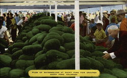 Piles of watermelons at Rocky Ford Fair Grounds Postcard