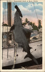 Hauling a Hammerhead Shark on Board, Florida