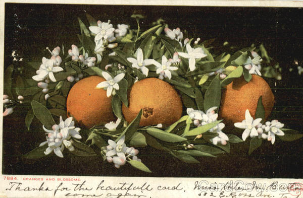 Oranges And Blossoms Fruit