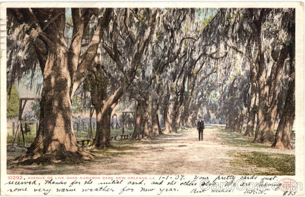 Avenue Of Live Oaks, Audubon Park New Orleans Louisiana