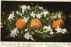 Oranges And Blossoms