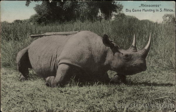 Rhinoceros - Big Game Hunting in South Africa