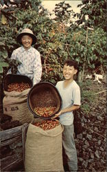 School Vacations Coincide With Harvests so the Youngsters Can Help to Pick Coffee Beans