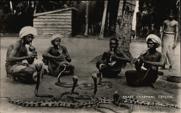 Photograph of Four Snake Charmers with Cobras