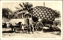 Oxen Pulling Cart With Oversized Pineapple